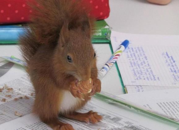 Eichhörnchen im Biologieunterricht